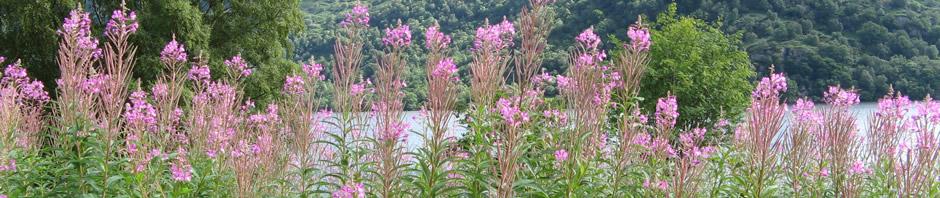 pink_flowers_v2.jpg